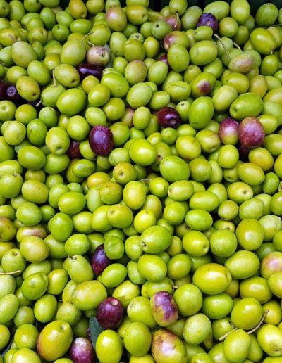 olives-2167822_1280